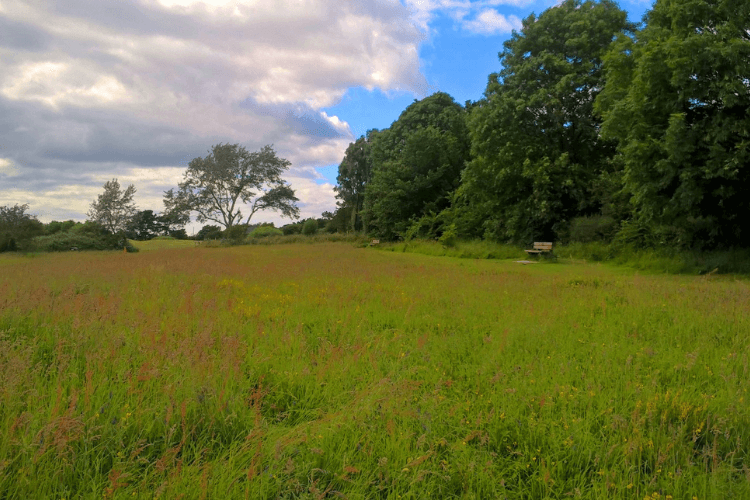 Picture taken at Wirral Country Park of the wildflower meadows with vibrant green grass and wildflowers