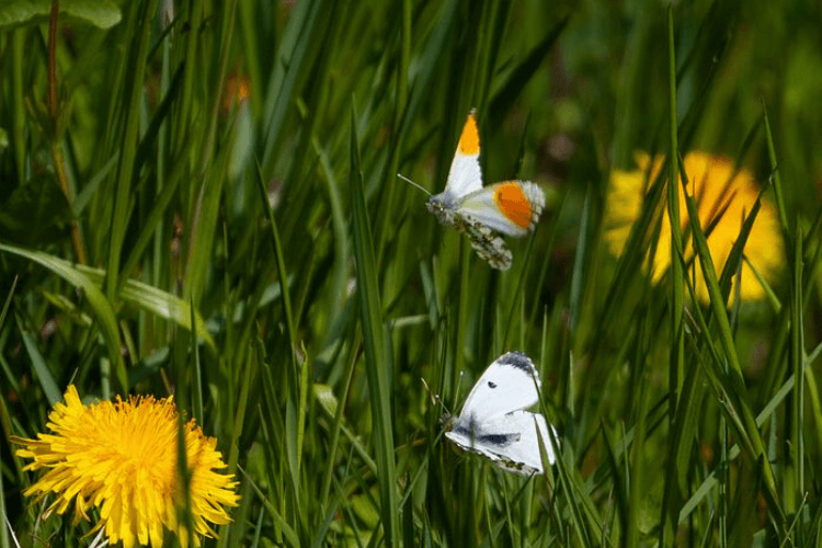 Grass with wildflowers and an organge tipped butterfly