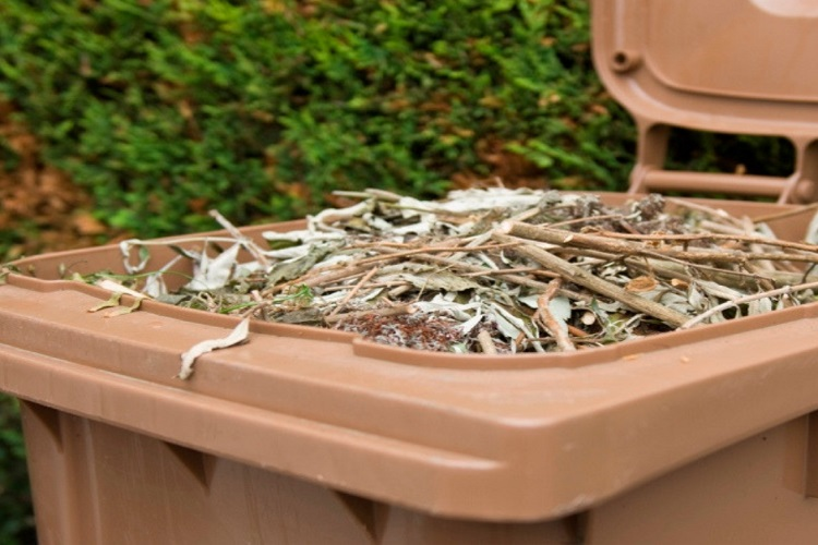Brown bin with lid open and full with garden waste