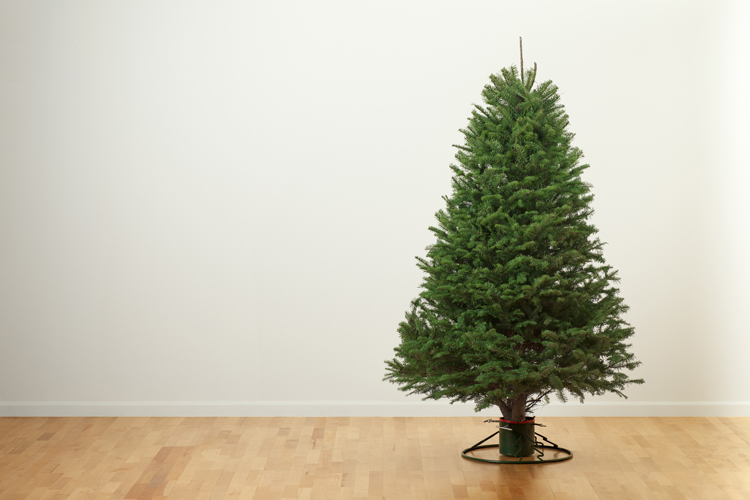 A Christmas tree ready to be recycled